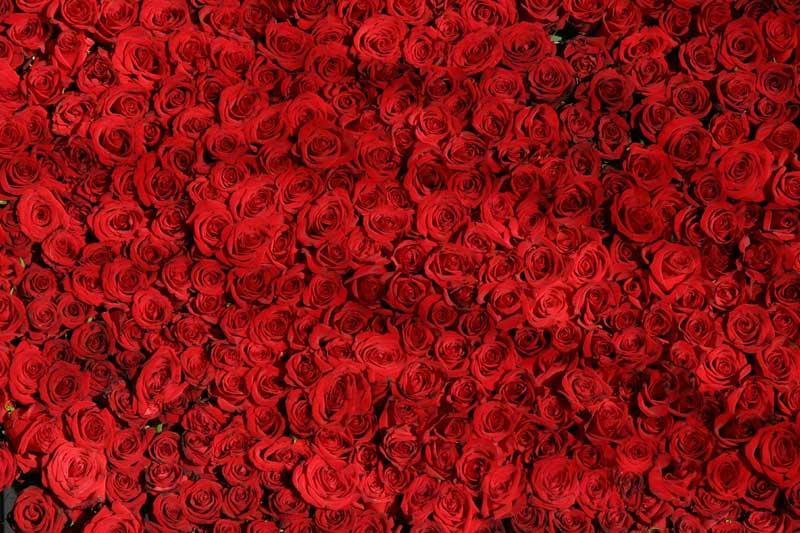 roses-090317-v2